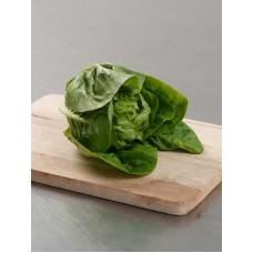 Baby Romaine Lettuce - per carton
