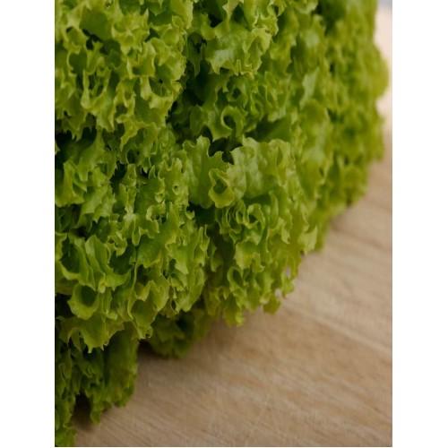 Green Coral Lettuce - per carton