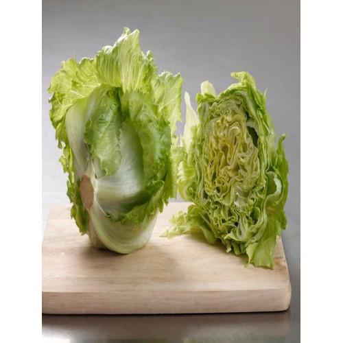 Iceberg Lettuce - per carton