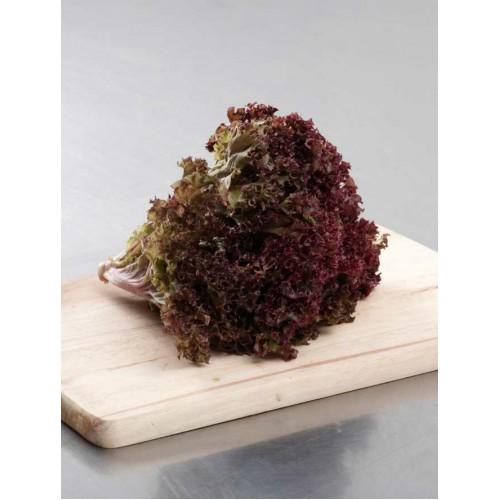Red Coral - per carton