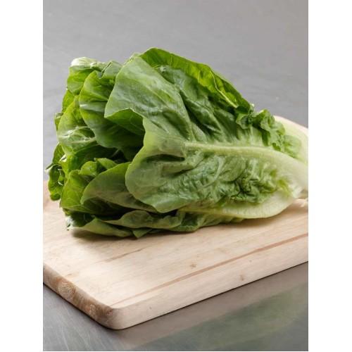 Romaine Lettuce - per carton